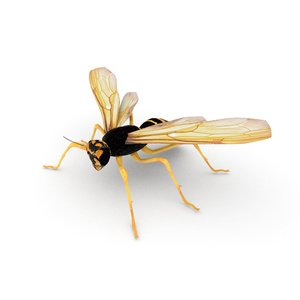 insect nature animal 3D model