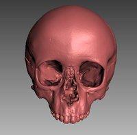 3D infant skull