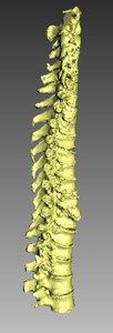 3D human spine model