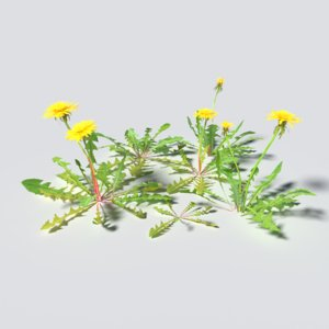 3D dandelion pack model