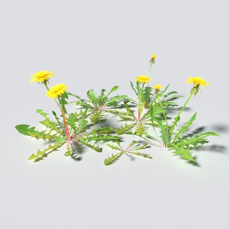 3D dandelion pack model