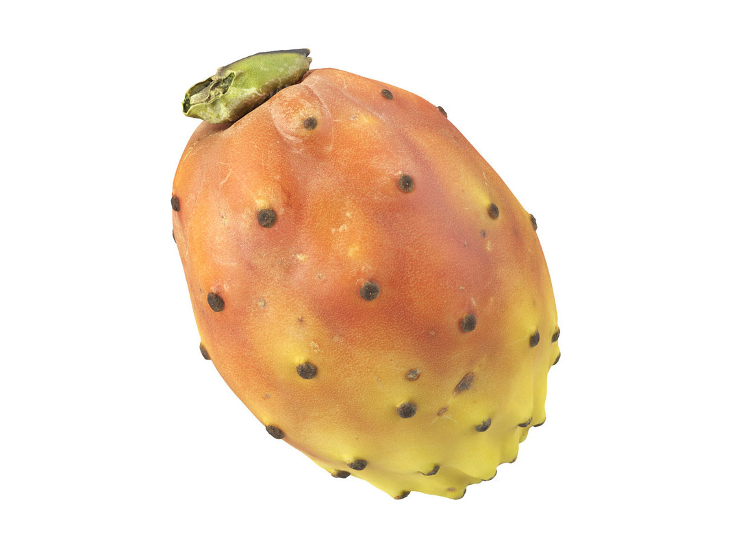 3D photorealistic scanned prickly pear model