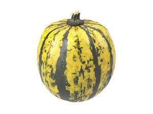 scanned decorative gourd 3D
