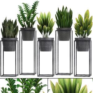 exotic plants flowers 3D model