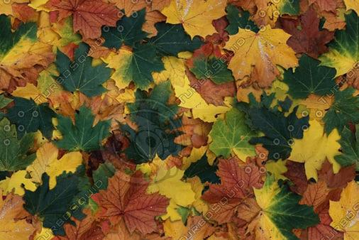 leaves-100.bmp