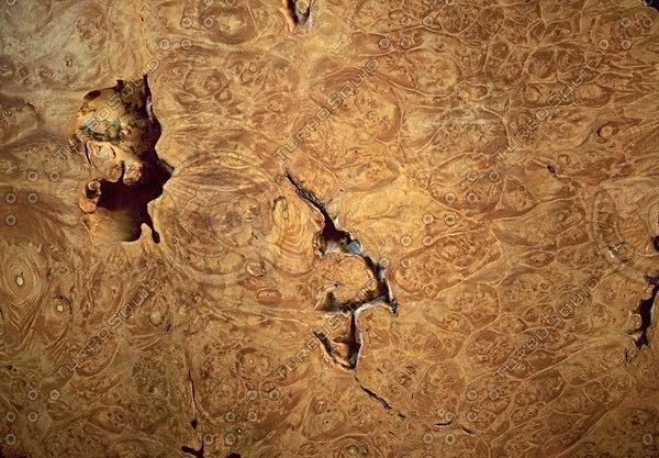 burled wood.jpg