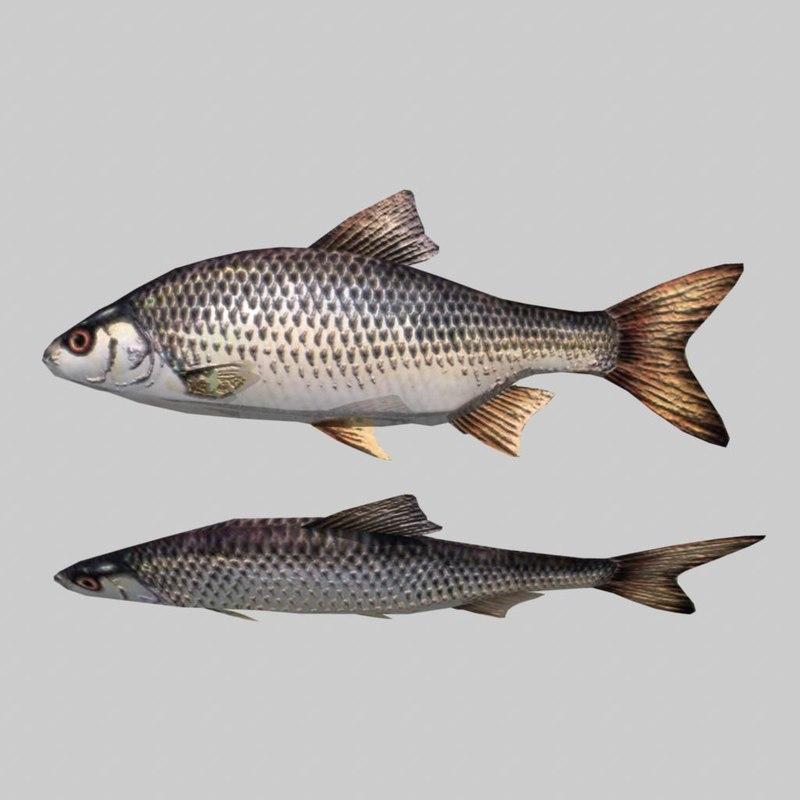 river sea fish fbx