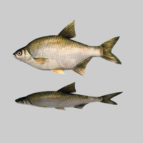 river sea fish 3d fbx