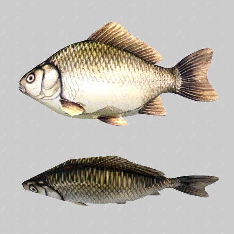 3d river sea fish