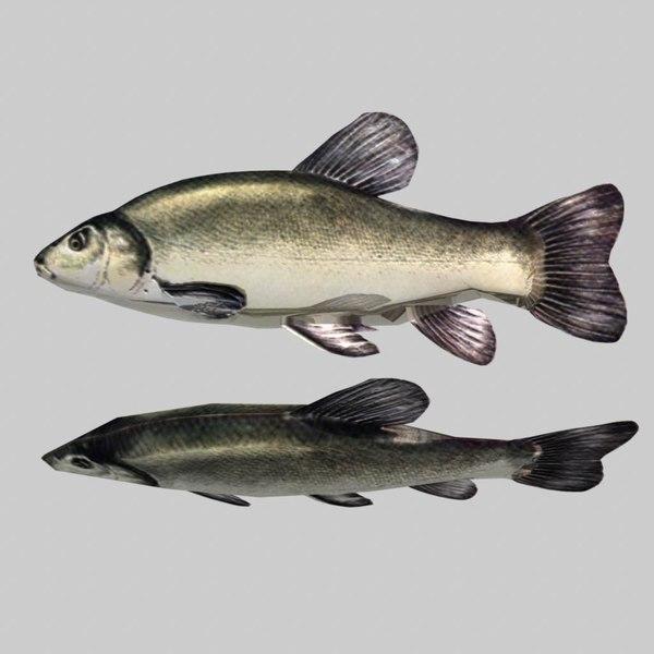 3ds max river sea fish