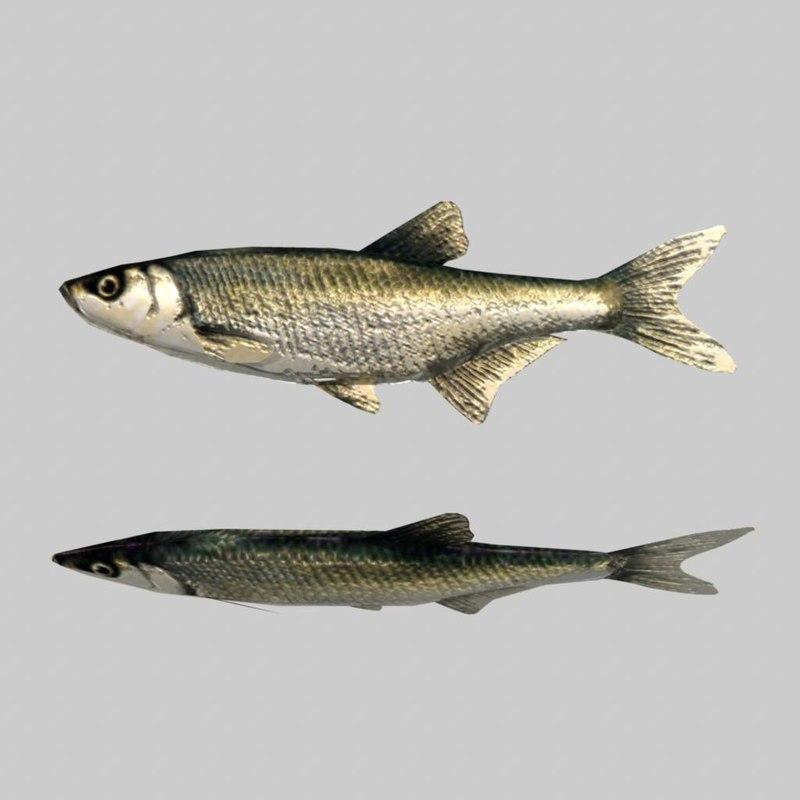 river sea fish 3d model