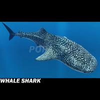 3d 3ds whale shark
