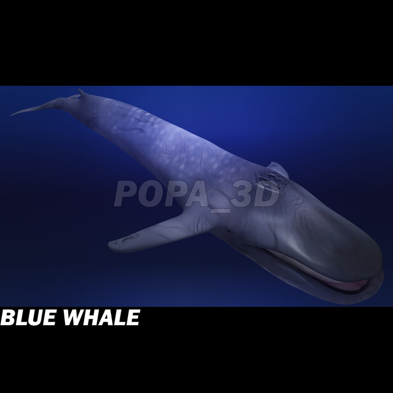 3ds max blue whale