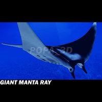 3ds manta giant