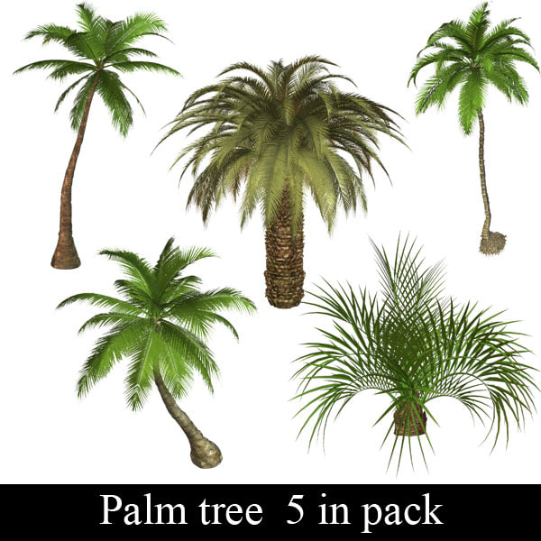 Palm tree 5 in pack