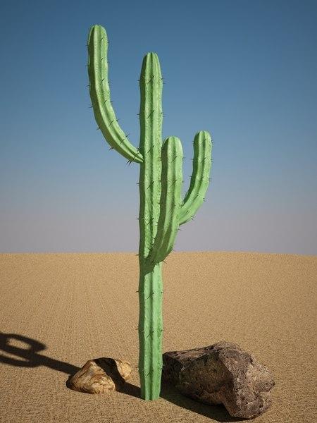 cactus mytillocactus