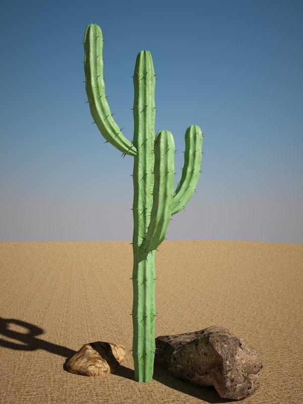 max mytillocactus cactus