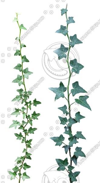 Ivy textures