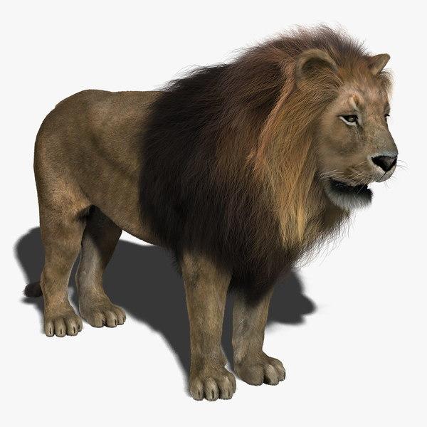 Lion (2) (FUR)