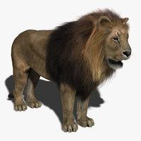 3d lion fur