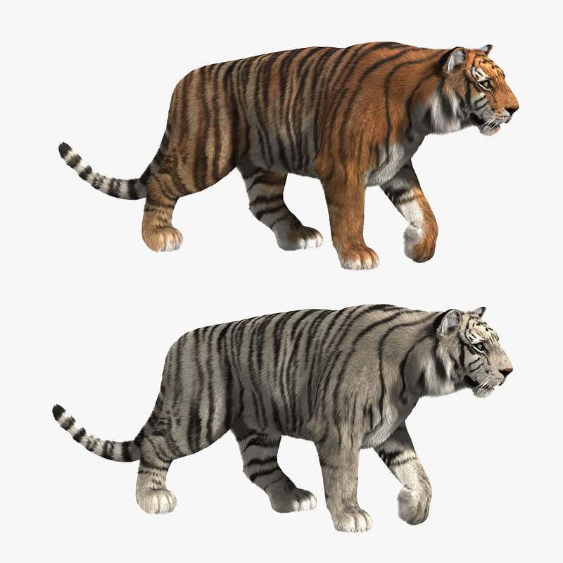 tigers fur 3d model