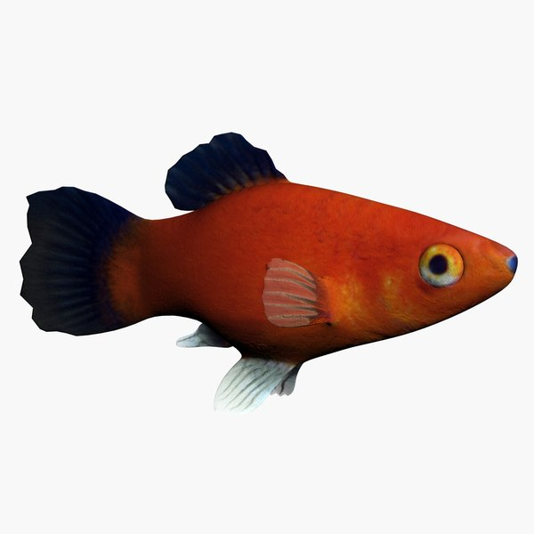 3d model platy fish