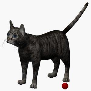 max rigged cat
