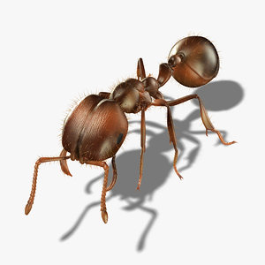 3d ant rigged model