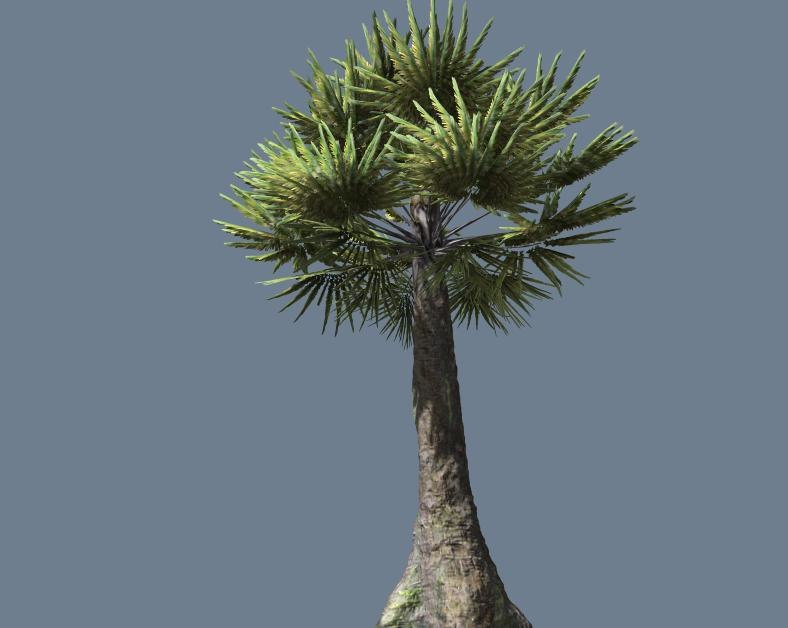 3d model palm tree pretty