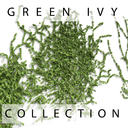 Green Ivy Plant Collection On Wall
