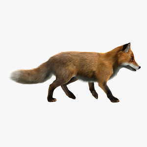 3d model red fox animation