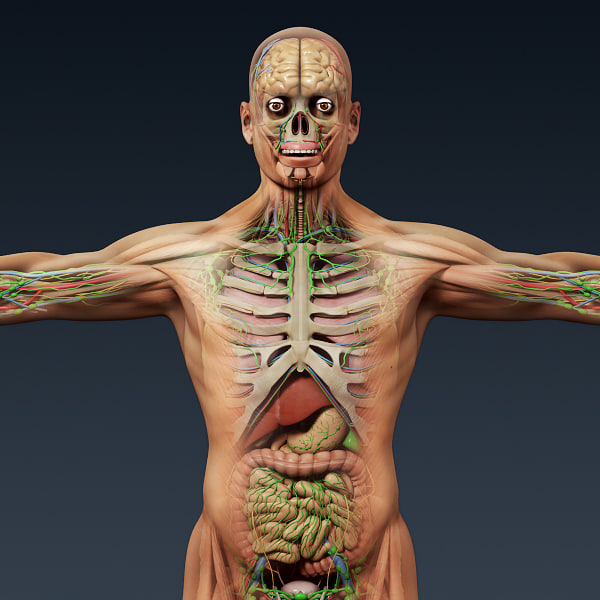 Turbocg 3d Human Male Female Complete Anatomy