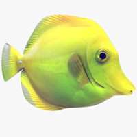 Yellow Tang Tropical Fish