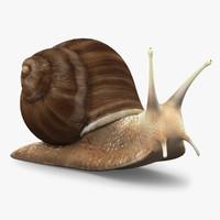 research snail obj