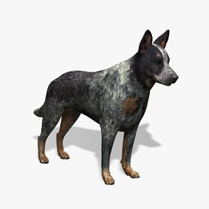 australian cattle dog obj