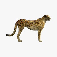 3d cheetah lion tiger