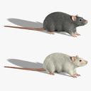 rat 3D models