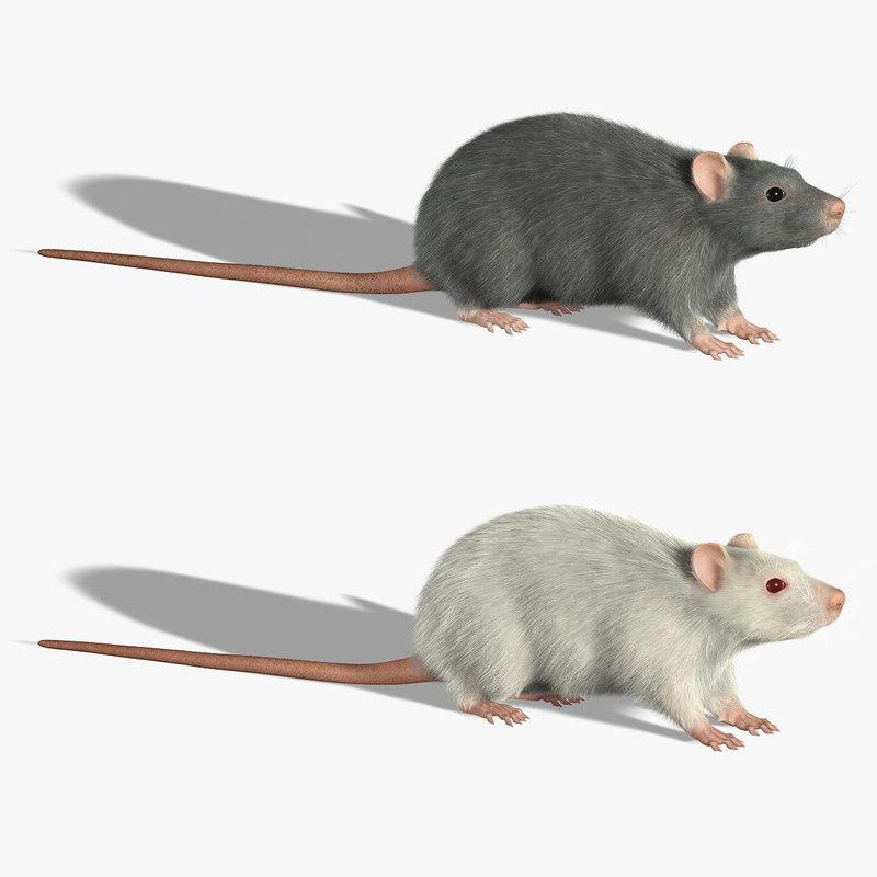 3d rats fur model