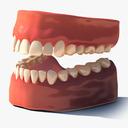 Teeth with gums