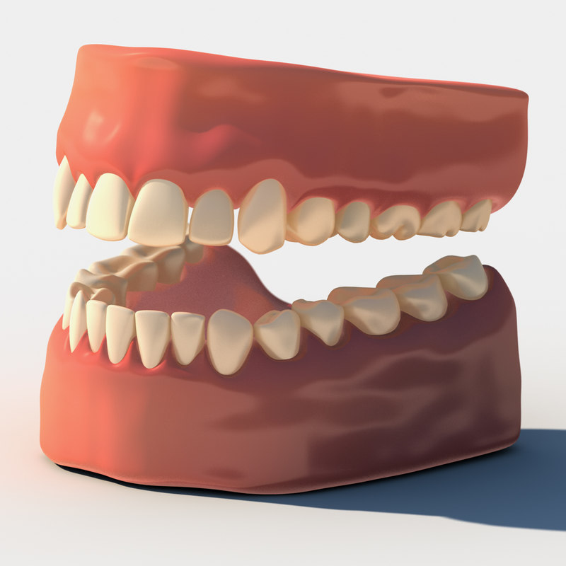 3d model human teeth gums