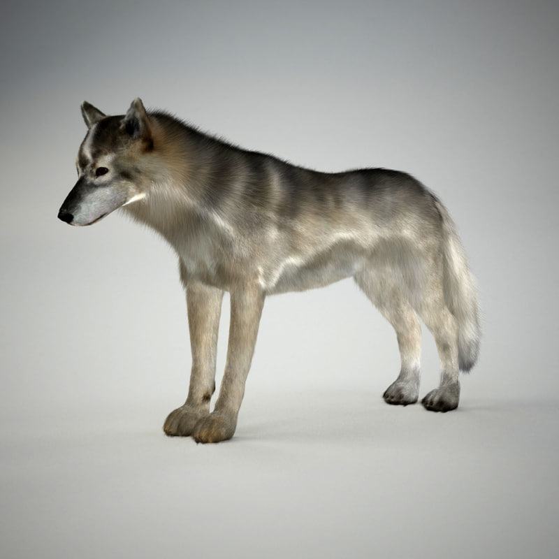 realistic wolf 3d 3ds