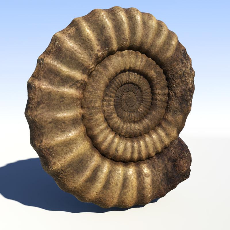 3d ammonite fossile