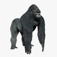 Gorilla (FUR)