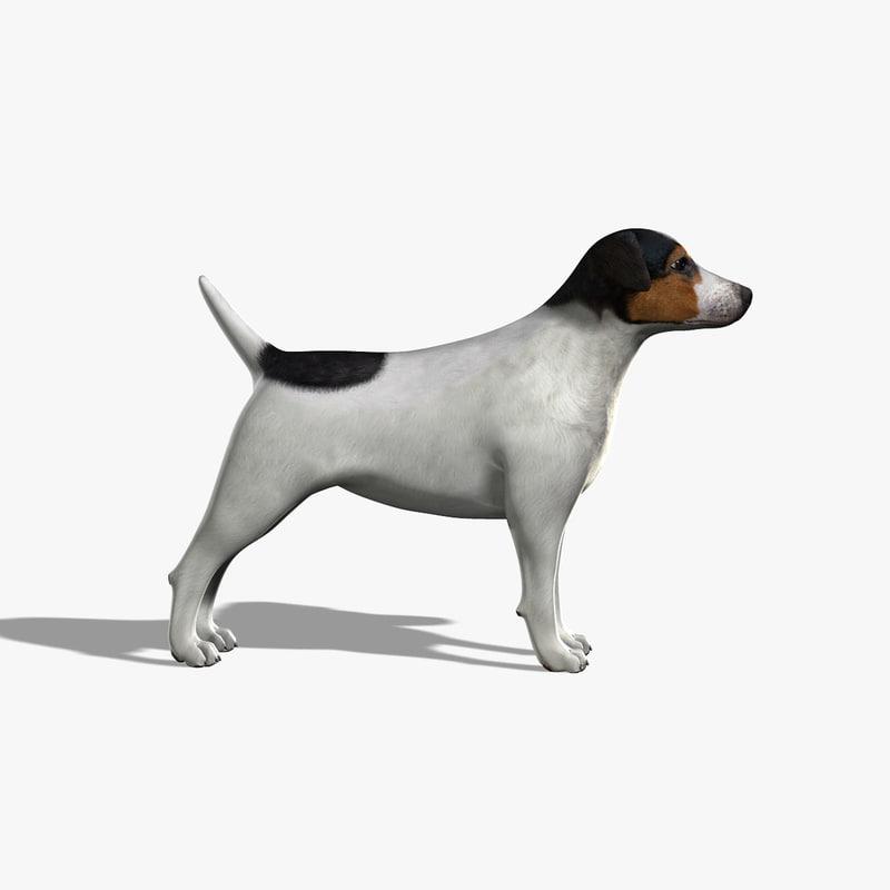 3d model jack russel terrier