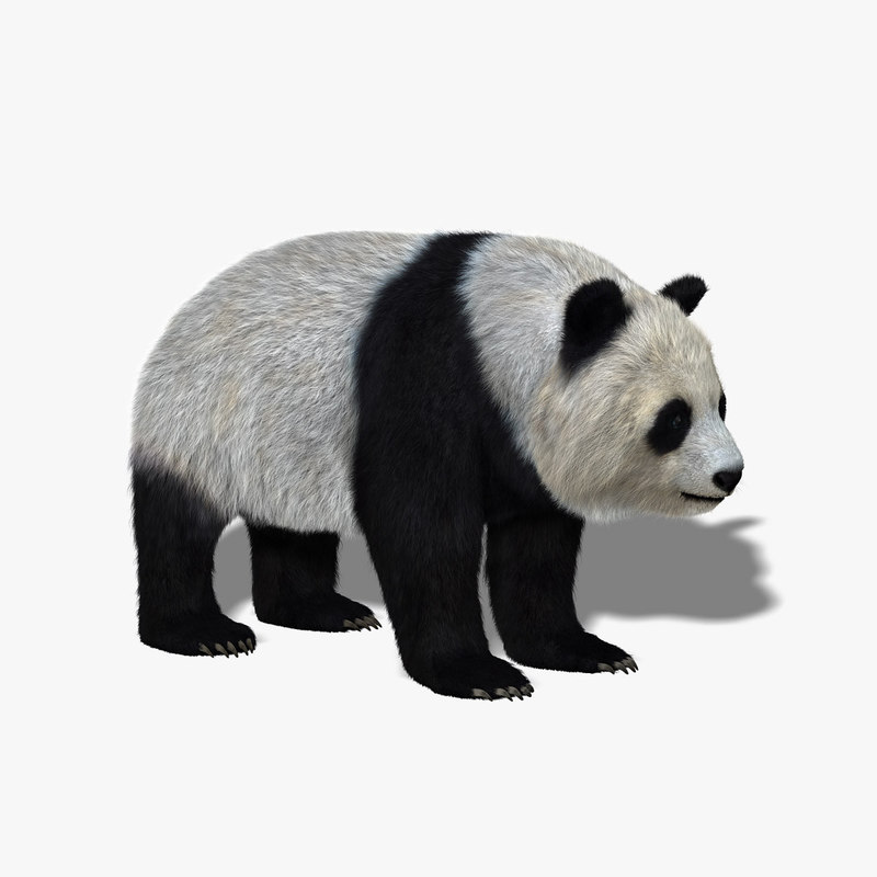 Pandra bear teen model consider