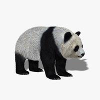 Giant Panda (FUR)