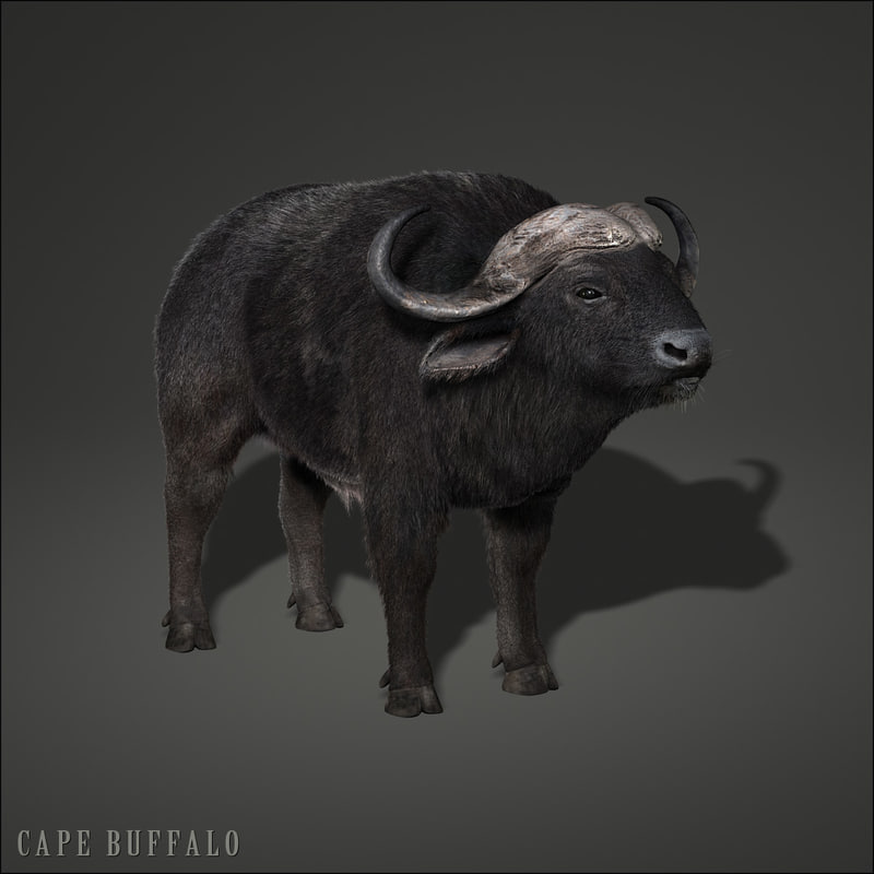 cape buffalo african fur 3d model