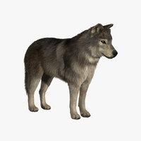 wolf fur 3d model