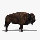 Buffalo 3D models