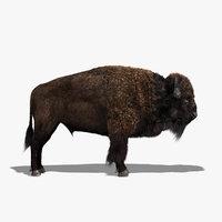 bison fur 3d model